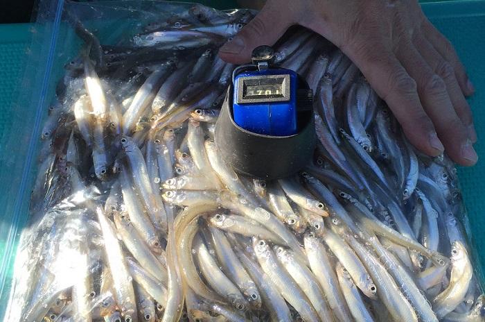 釣果を上げる最初の一歩